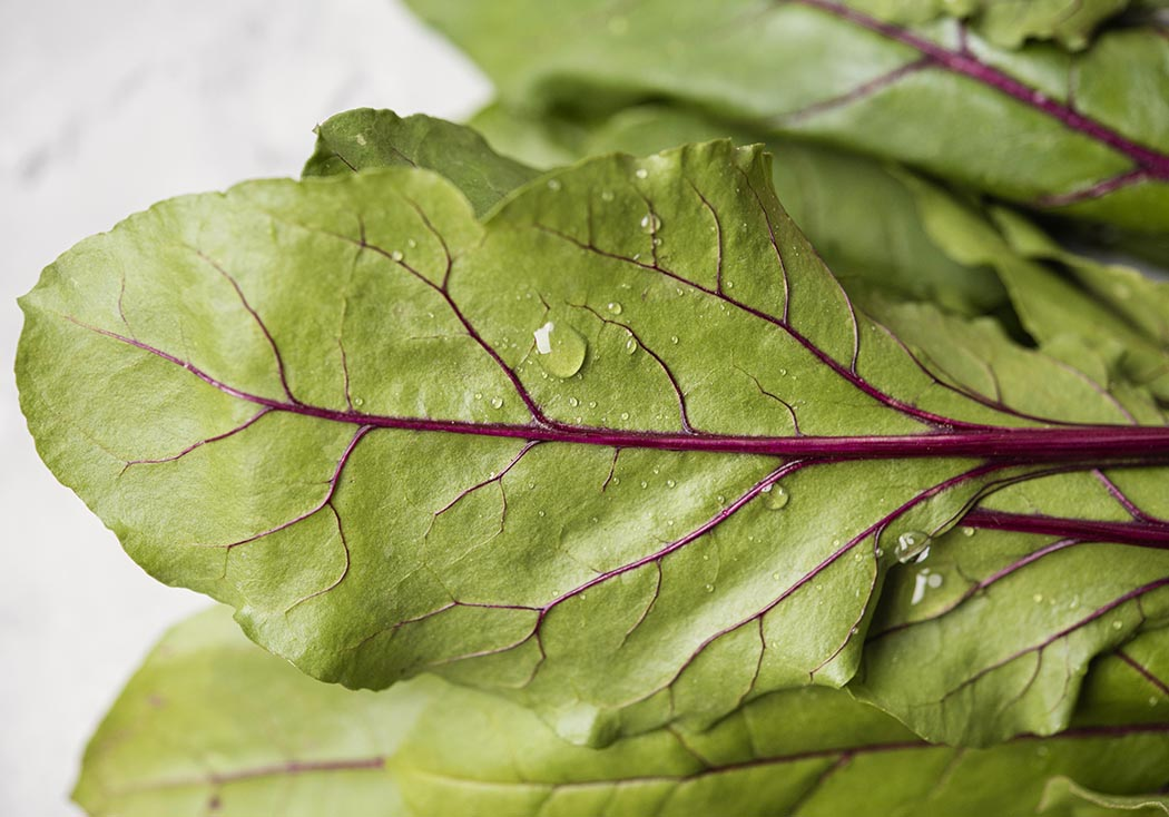 qué plantar en diciembre: acelgas