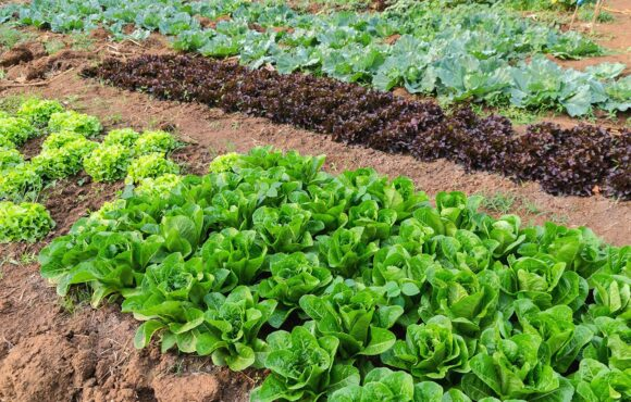¿Qué hortalizas podemos plantar en diciembre?